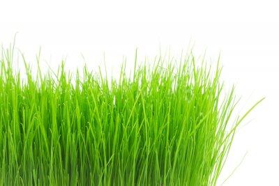 Наклейка Свежий зеленый трава