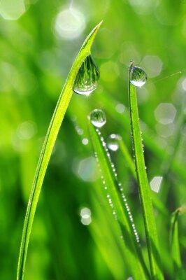Наклейка Свежий зеленый трава с каплями росы крупным планом. Природа фон