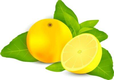 Наклейка Свежие лимоны с листьями белом фоне