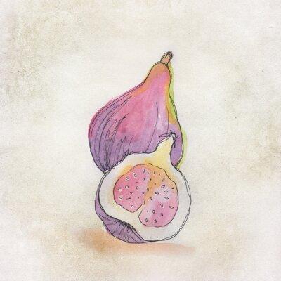 Наклейка Fruit illustration with watercolor