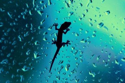 Наклейка Gecko на стекле окна мокрые от дождя Капли