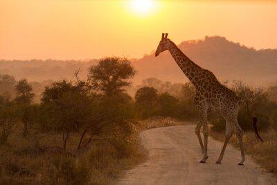 Наклейка Giraffe At Sunrise Kruger National Park