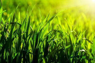 Наклейка трава и солнечный свет