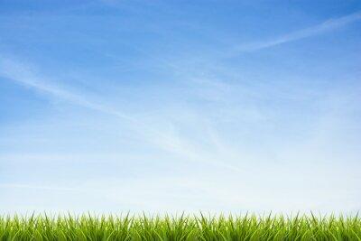 Наклейка Трава трава под голубым небом и облаками