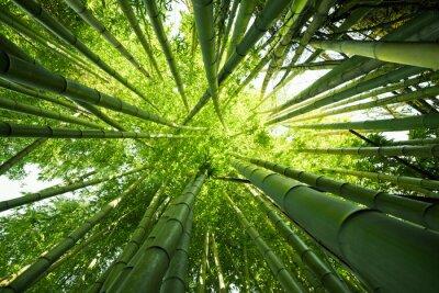 Наклейка Зеленый бамбук природы фоны