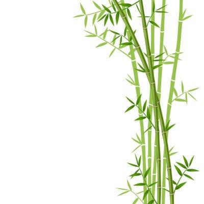 Наклейка Зеленый бамбук на белом фоне, векторные иллюстрации