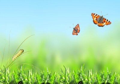 Наклейка Зеленая трава, гусеница и бабочка