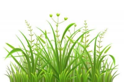 Наклейка Зеленый фон травы на белом фоне