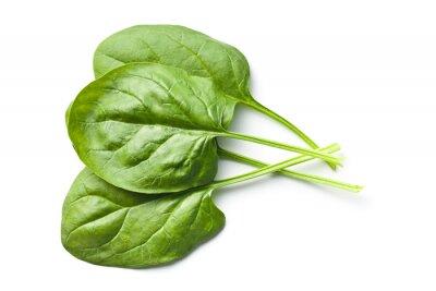 Наклейка зеленые листья шпината