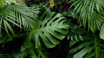 Наклейка Зеленые тропические листья Монстера, ладонь, папоротник и декоративные растения фон фон