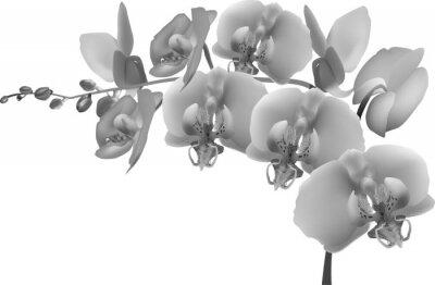Наклейка серый орхидеи филиал на белом фоне