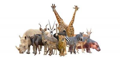 Наклейка Группа Африка животных
