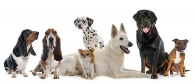 Наклейка группа собак