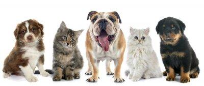 Наклейка группа домашних животных