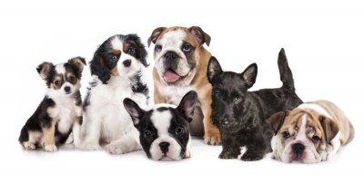 Наклейка Группа щенков сидя перед белом фоне