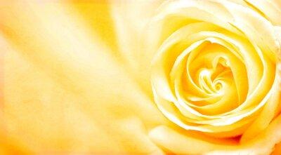 Наклейка Гранж баннер с желтой розой и текстуры бумаги