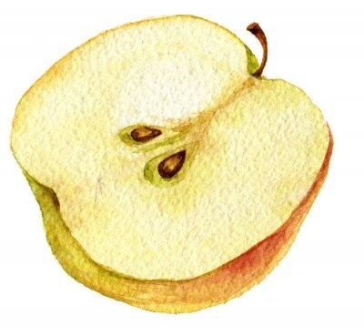 Наклейка Half apple drawing by watercolor