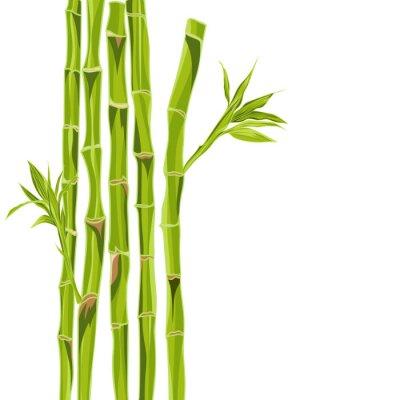 Наклейка Ручной обращается зеленый бамбук с пространством задний для текста
