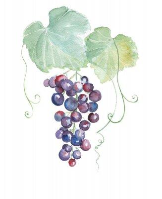Наклейка Ручной обращается акварель иллюстрации фиолетовый виноград