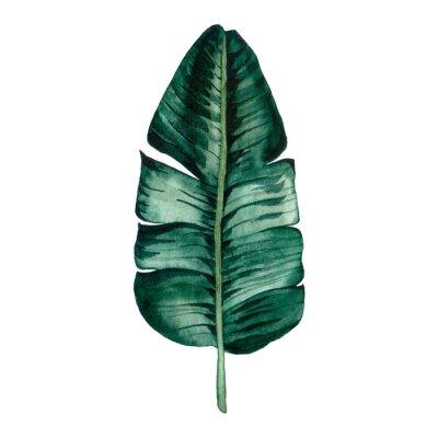 Наклейка Hand drawn watercolor tropical plants set. Exotic palm leaves, jungle tree, brazil tropic botany elements.