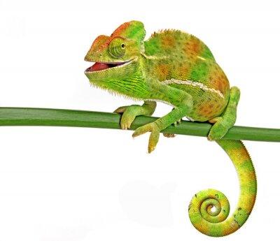 Наклейка счастливы хамелеон
