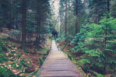 Наклейка походы путь внутри лесного ландшафта