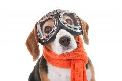 Наклейка праздник питомец концепция, собака в полете очки
