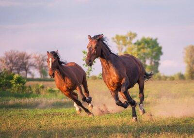 Наклейка лошадь