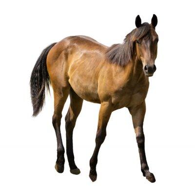 Наклейка Лошадь изолированные