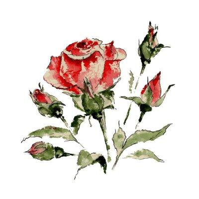 Наклейка Иллюстрация красной розы