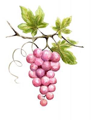 Наклейка Иллюстрация - виноград