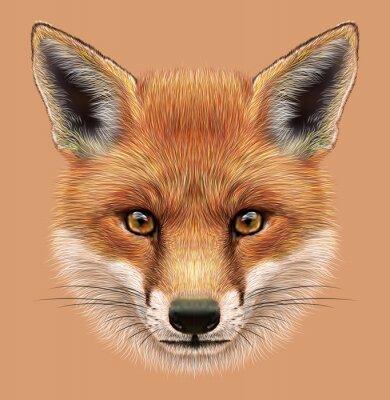 Наклейка Показательный Портрет Red Fox. Милые пушистые лицо леса Fox.