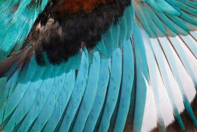 Наклейка Изображение бело-горло зимородка крылья на белом фоне. Птица. Animal.