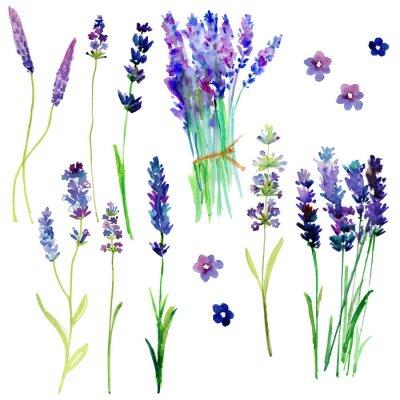 Наклейка Изолированные Прованс цветы лаванды. Акварели цветочный набор для вашего дизайна.