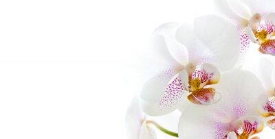 Наклейка изолированные цветки орхидеи