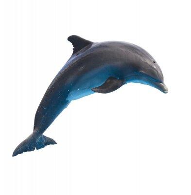 Наклейка jumping dolphin on white