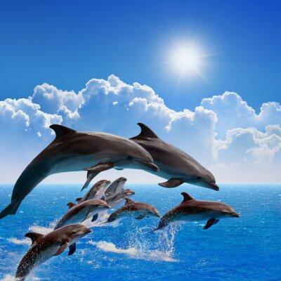 Наклейка Прыжки дельфинов