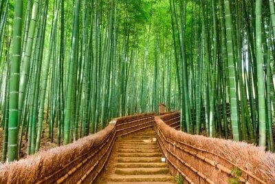 Наклейка Киото, Япония Бамбуковый лес