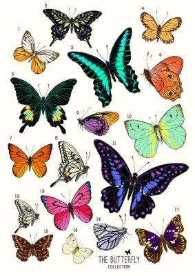 Наклейка Большая коллекция бабочек, рисованной иллюстрации набор isolated.Vector