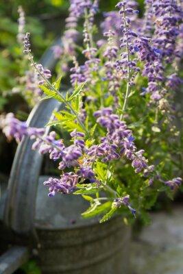 Наклейка Lavender Flowers in Garden Watering Can