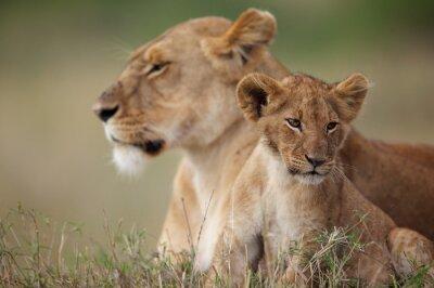 Наклейка Львенок со своей матерью в фоновом режиме