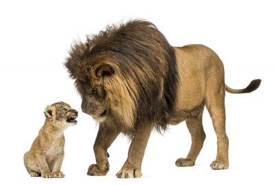 Наклейка Лев стоя и глядя львенка