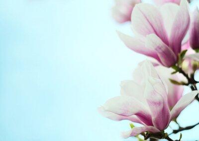 Наклейка магнолии цветы на фоне голубого неба