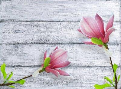 Наклейка цветы магнолии на фоне ветхих деревянных досок