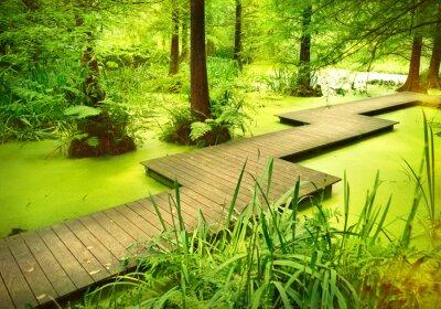 Наклейка Современный тропинка или трап через пруд в лесу. Старые деревья, стоящие в болоте, или болото в лесу. Солнечный луч и плавный свет, падающий сквозь верхушки деревьев.