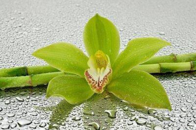 Наклейка Мокрая орхидея г bambusem