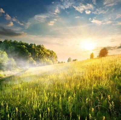 Наклейка Утро над цветущие поля