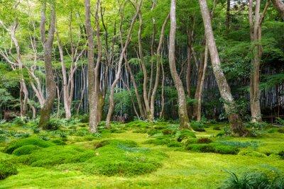Наклейка вид на сад Мосс в Арасияма, Киото