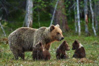 Наклейка Мать медведь и медвежата