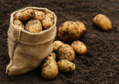 Наклейка Нового урожая картофеля